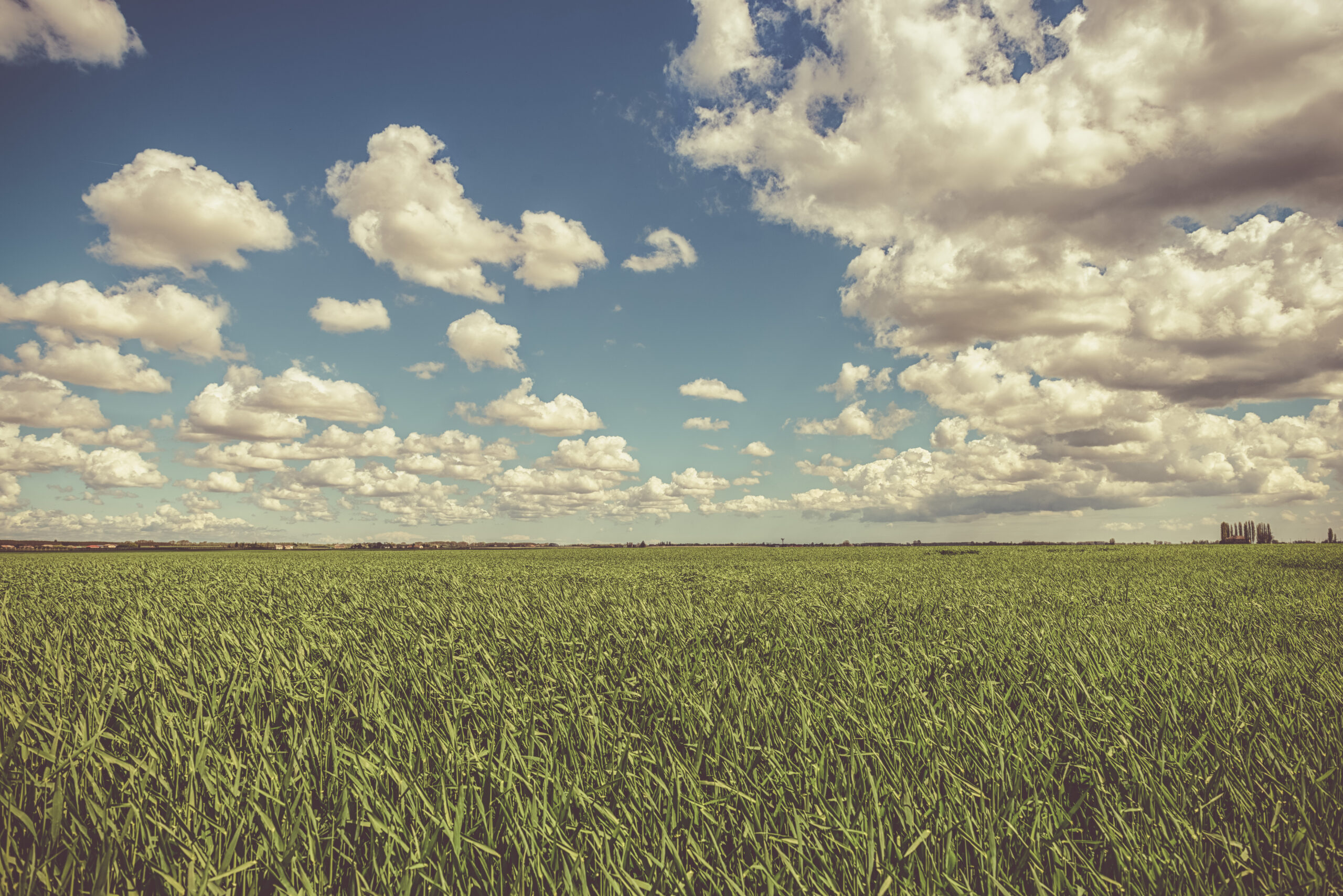 Spring cloudy sky over the grain field